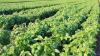 Reati agroalimentari: nuove norme approvate dal Consiglio dei Ministri